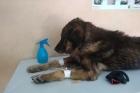 В Барнауле рыбаки спасли собаку, которая примерзла ко льду
