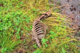 Свалку собачьих трупов нашли в лесу под Бийском