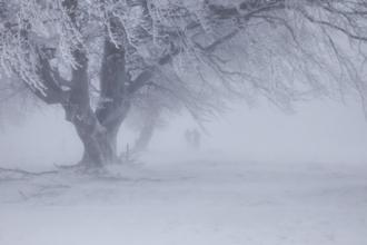Сильный ветер на Алтае будет дуть до 30 января